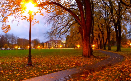 osu walkway at dusk with trees and lamps